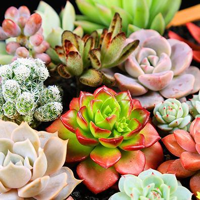 多肉植物种植肉肉植物多肉组合绿植花卉盆栽