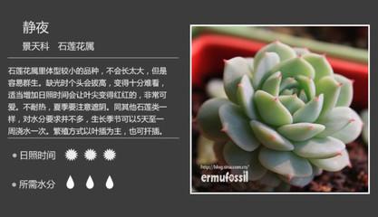 景天科多肉植物名称