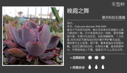 景天科多肉植物图鉴